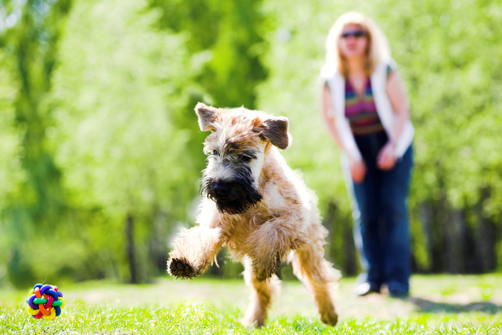 Pet friendly lawns to play catch with your dog